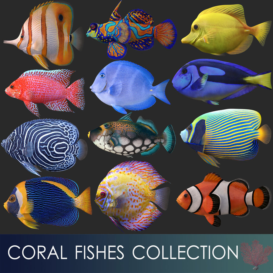 corals and coral fishes collection royalty-free 3d model - Preview no. 5