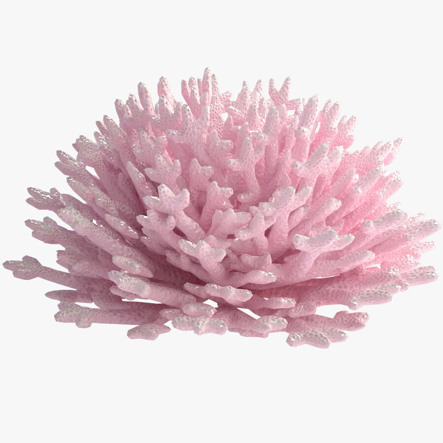 corals and coral fishes collection royalty-free 3d model - Preview no. 25