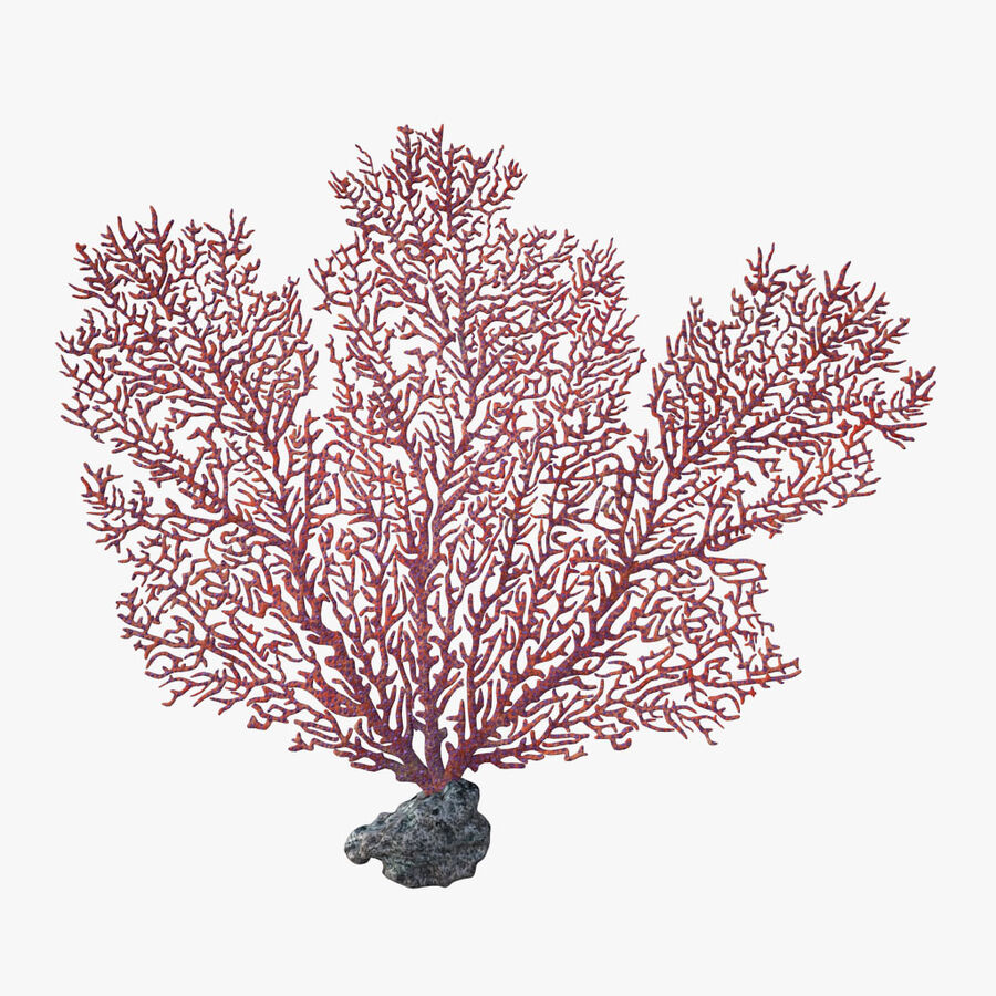 corals and coral fishes collection royalty-free 3d model - Preview no. 74