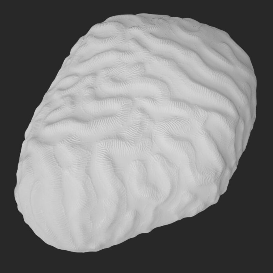 corals and coral fishes collection royalty-free 3d model - Preview no. 20