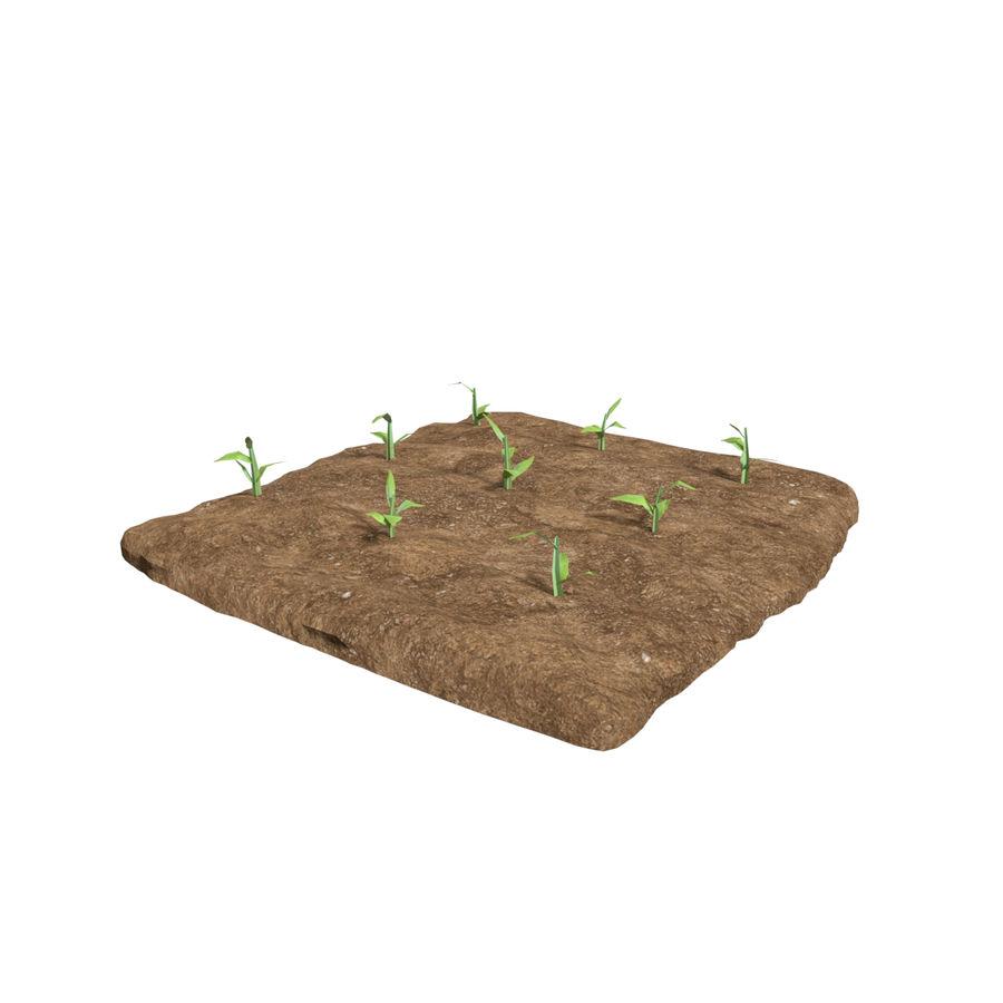 Maïs 3 stades de croissance royalty-free 3d model - Preview no. 7