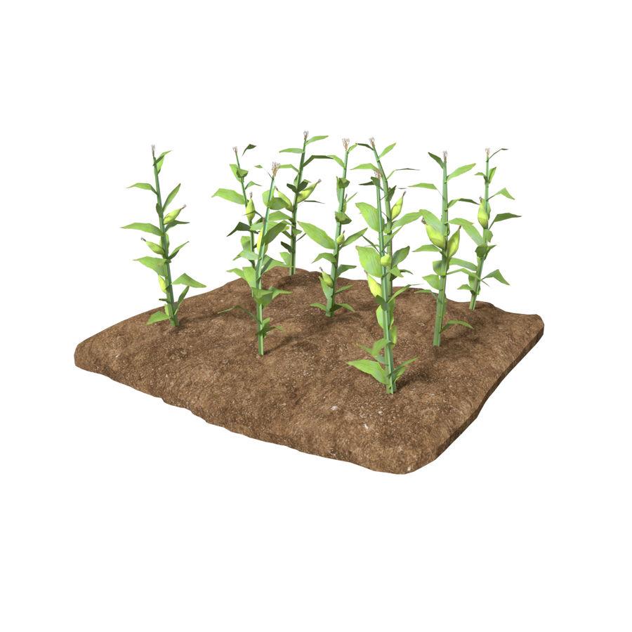 Maïs 3 stades de croissance royalty-free 3d model - Preview no. 1