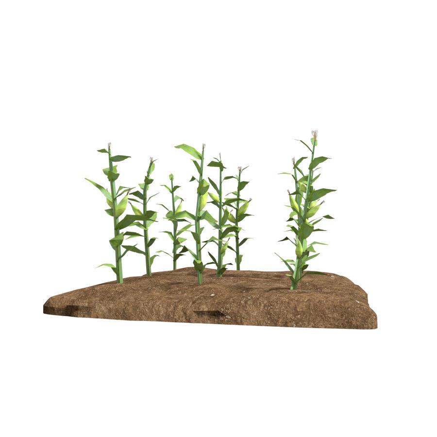 Maïs 3 stades de croissance royalty-free 3d model - Preview no. 2