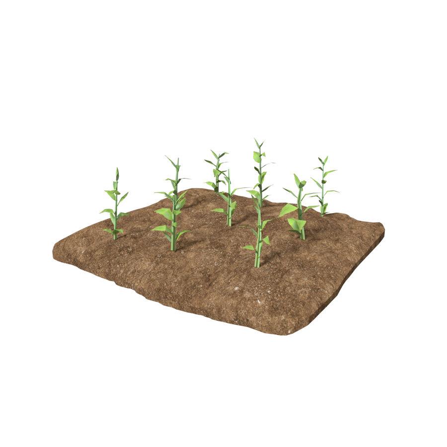 Maïs 3 stades de croissance royalty-free 3d model - Preview no. 4