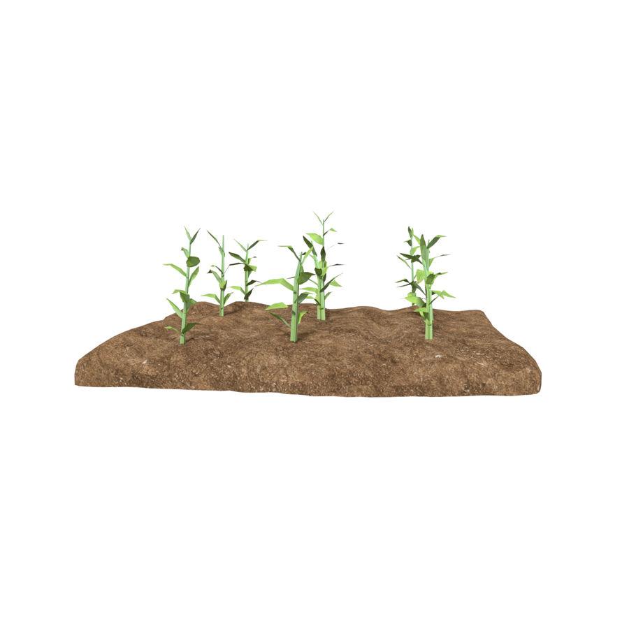 Maïs 3 stades de croissance royalty-free 3d model - Preview no. 5