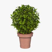 Bush Pot 3d model