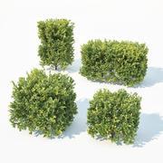 Buxus Sempervirens #7 Cubes 3d model