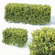 Buxus Sempervirens # 5 cobertura 50cm 3d model
