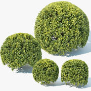 Buxus Sempervirens #9 spherical 3d model