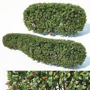 Cotoneaster lucidus # 1 haie personnalisable 3d model