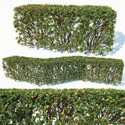Cotoneaster lucidus # 3 aanpasbare transparante haag 3d model