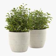 Plante extérieure en pot 3d model