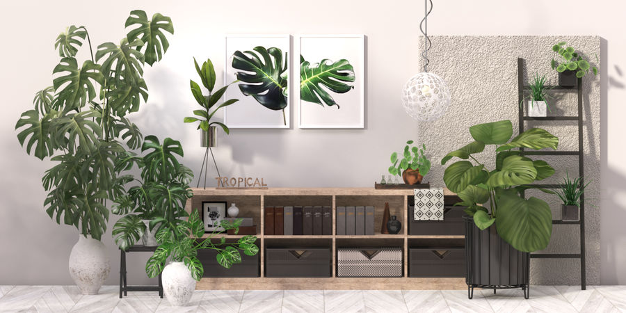 Indoor plant collection royalty-free 3d model - Preview no. 6