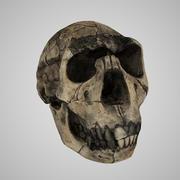 Realisitic Homo Ergaster (Нарикотоме Бой) 3d model