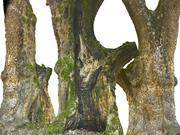 거대한 고대 나무 3d model