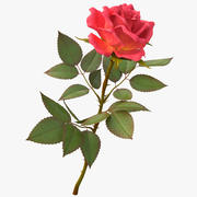 Роза светло-красная 3d model
