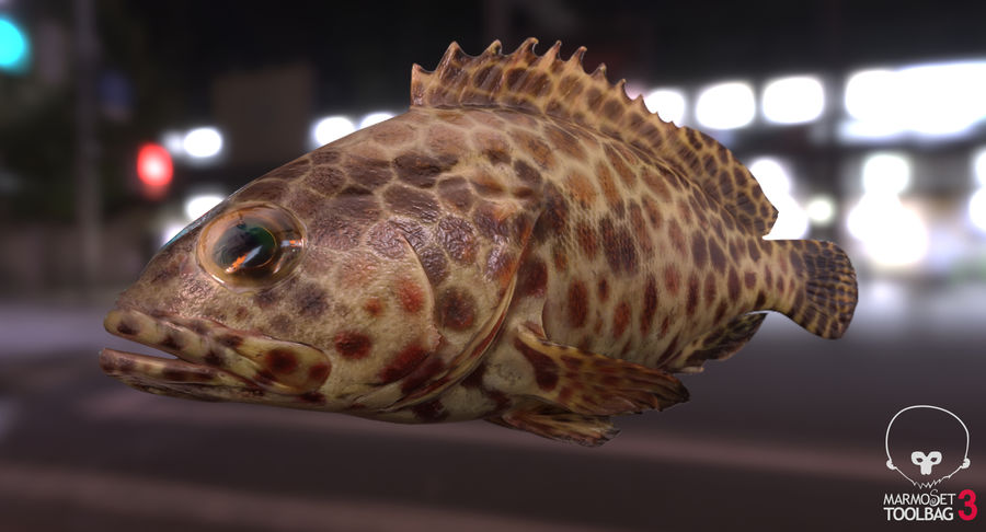 Grouper royalty-free 3d model - Preview no. 12