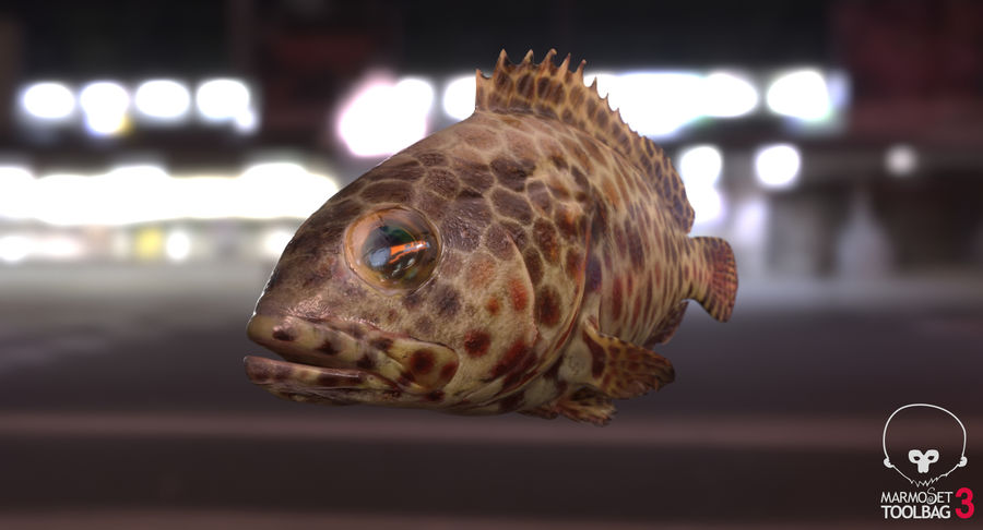Grouper royalty-free 3d model - Preview no. 11