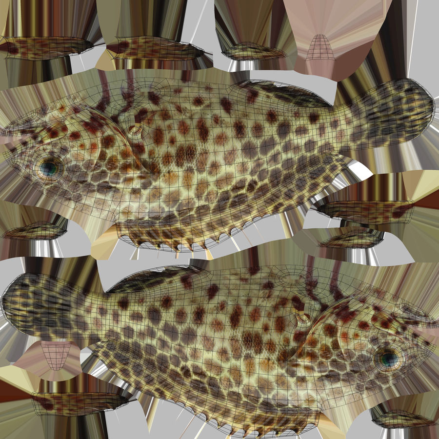 Grouper royalty-free 3d model - Preview no. 16