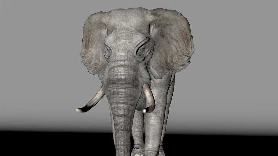 African elephant royalty-free 3d model - Preview no. 10