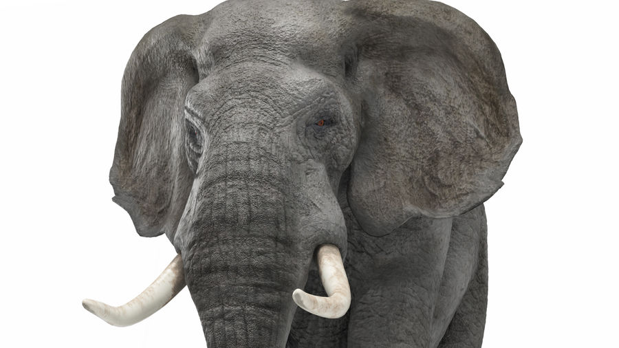 African elephant royalty-free 3d model - Preview no. 3