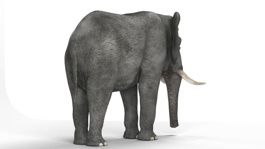 African elephant royalty-free 3d model - Preview no. 7