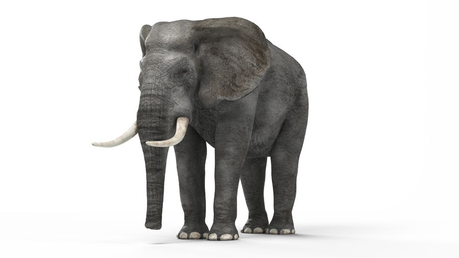 African elephant royalty-free 3d model - Preview no. 4