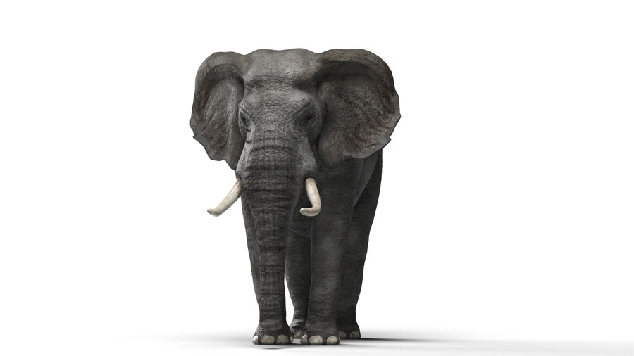 African elephant royalty-free 3d model - Preview no. 1