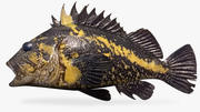 China Rockfish 3d model