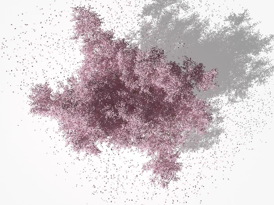 Cherry Blossom Tree royalty-free 3d model - Preview no. 6