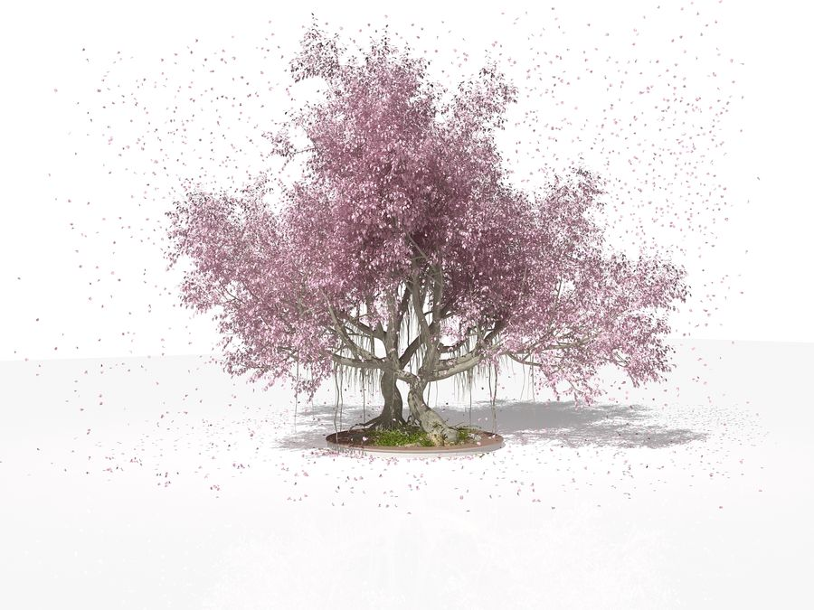 Cherry Blossom Tree royalty-free 3d model - Preview no. 2
