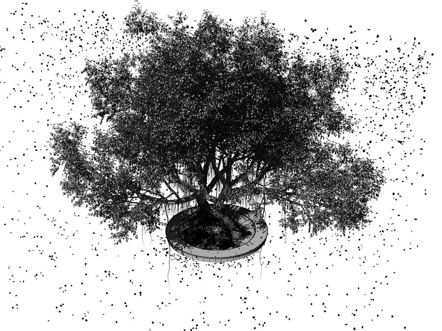 Cherry Blossom Tree royalty-free 3d model - Preview no. 11