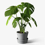龟背竹植物 3d model