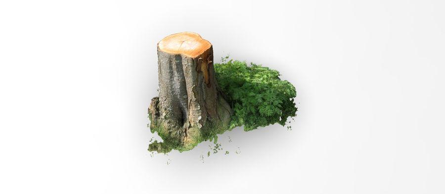 Fotorealistyczne pnie drzew (12 LOD na drzewo) royalty-free 3d model - Preview no. 2