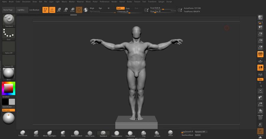 Mannelijke anatomie v5 royalty-free 3d model - Preview no. 5