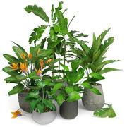 Plantes tropicales 01 3d model