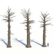 Мертвые гигантские деревья красного дерева 3d model