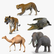 Rigged African Animals 3D Models Collection 2 3d model