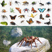Insects Big 3D Models Collection 2 3d model