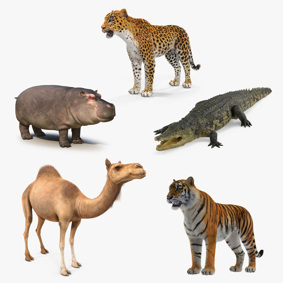 African Animals 3D Models Collection 2 royalty-free 3d model - Preview no. 1