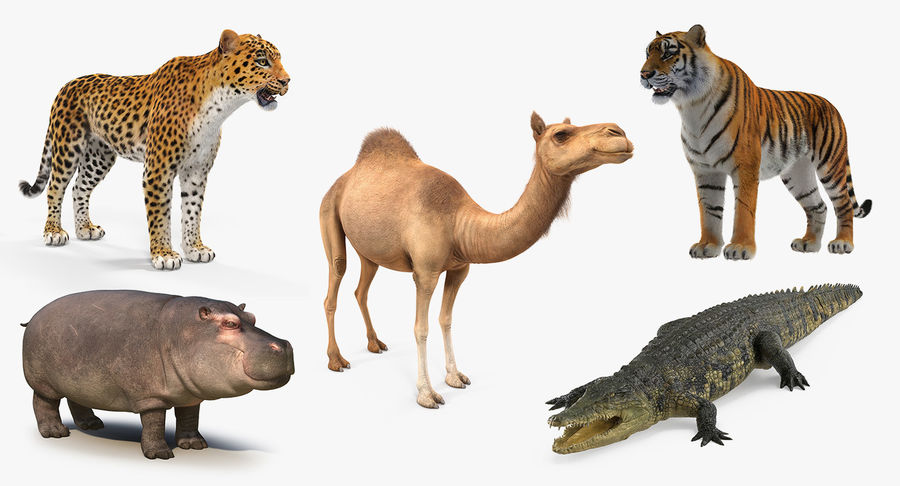 African Animals 3D Models Collection 2 royalty-free 3d model - Preview no. 2