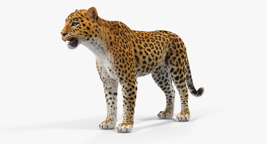 African Animals 3D Models Collection 2 royalty-free 3d model - Preview no. 10