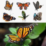 Coleção de borboletas equipadas 2 3d model