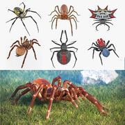 딱딱한 거미 3D 모델 컬렉션 2 3d model