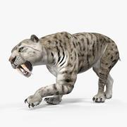 Arctic Saber Tooth Cat Rigged 3D Model 3d model