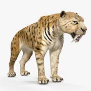 Saber Tooth Tiger 3D Model 3d model