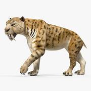 Saber Tooth Tiger Walking Pose 3D Model 3d model