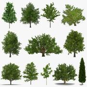 Colección de modelos 3D de árboles de verano 2 modelo 3d