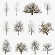 Winter Trees Collection 2 3d model