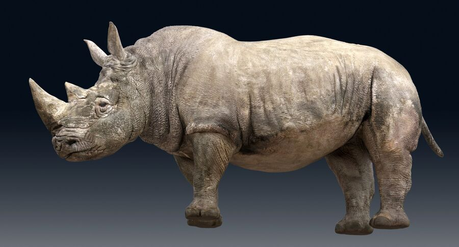 Rhinoceros_Rigged royalty-free modelo 3d - Preview no. 12
